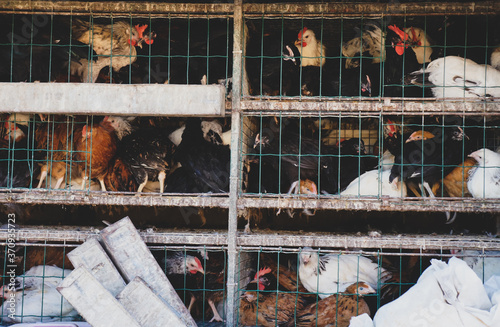 Photo hens in the cage for sale at the Poultry market, Live poultry crammed into crates on sale at an outdoor market