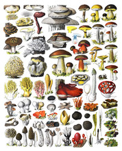 Mushrooms Collage, Autumn Fore...