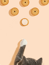 The Cat Reaches The Liver With Its Paw On The Yellow Background. Copy Space, Banner, Top View