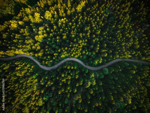 Valokuvatapetti Winding Curvy Road Trough Forest