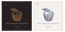 Apple Engraving Illustration F...