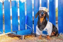 Funny Handyman Dachshund Dog I...