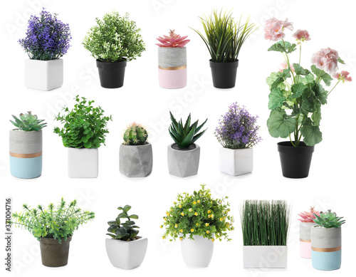 Set of artificial plants in flower pots isolated on white Canvas Print