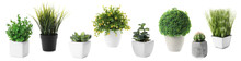 Set Of Artificial Plants In Flower Pots Isolated On White. Banner Design