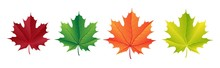 Autumn Vector Set With Maple L...