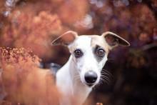 Herbstliches Hundeportrait Hin...