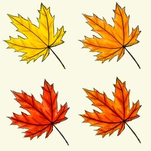 Set Of Digital Sketch Maple Leaf. Black Doodle Outline, Orange, Yellow And Red Colored Foliage Isolated On White. Watercolor Imitation Bright Dark And Light Colors With Stains. Natural Product