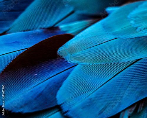 Parrot Feathers blue