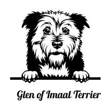 Peeking Dog - Glen Of Imaal Terrier Breed - Head Isolated On White