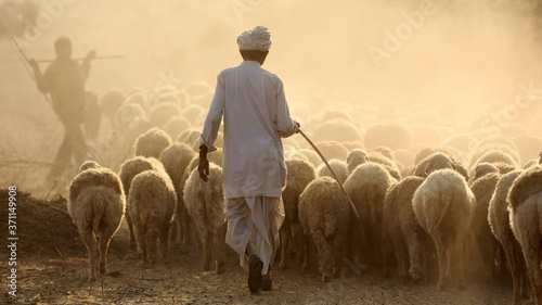 Shepard with a herd of sheep in the Thar Desert in Jaisalmer, India Fototapeta