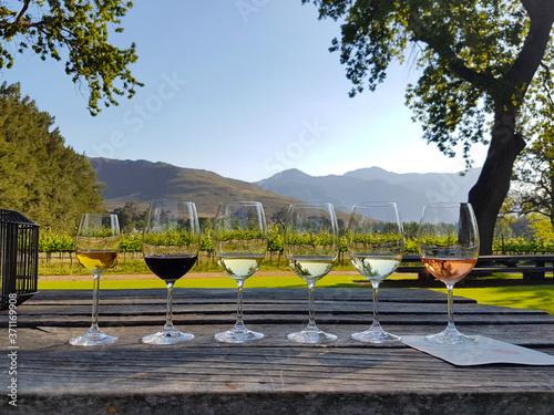 Obraz na plátně Wine tasting in Stellenbosch, South Africa
