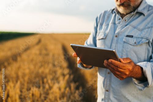 Fototapeta farmer standing in corn field using tablet computer obraz