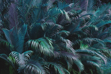 Panel Szklany Popularne tropical palm leaves in forest with light and shadow, vintage tone