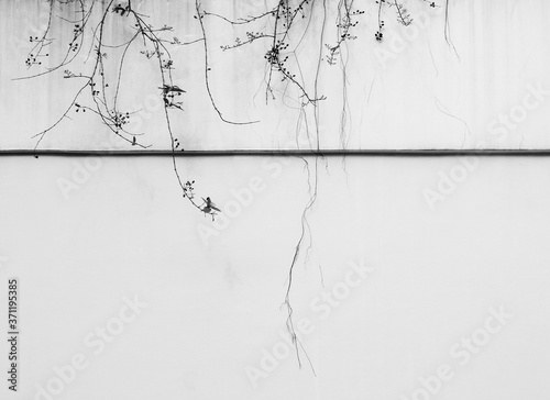 Leinwand Poster branch of tree on aged street white concrete wall