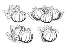 Pumpkins With Leaves, Silhouette On White Background.