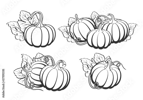 Fényképezés Pumpkins with leaves, silhouette on white background.