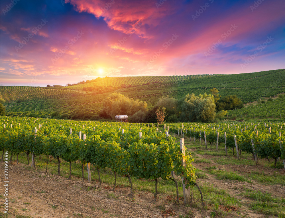 Chianti vineyard landscape in Tuscany, Italy field