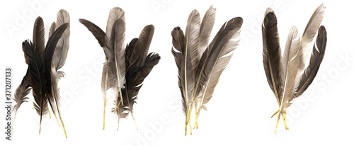 Natural bird feathers isolated on a white background Wallpaper Mural