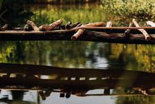 A Makeshift Wooden Bridge Across A Rapid Stream. Homemade Wooden Bridge Across The Ditch.