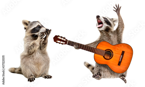 Tablou Canvas Surprised raccoon looking at a raccoon playing on guitar isolated on white backg