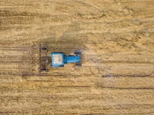 Blue Tractor Ploughs Agricultural Field.