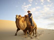 Camels Walking In Sandy Desert
