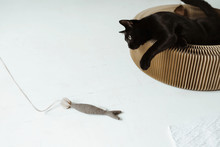 Black Cat Playing With Cat Toy