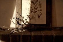 Sprig Of Lavender Resting On T...