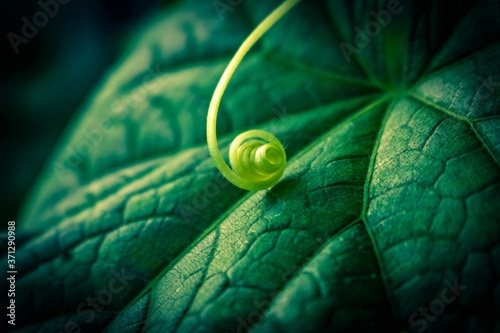 Leinwand Poster green leaf macro