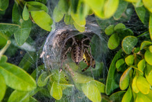 A Spider Hole Between The Leaves