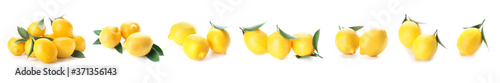 Fotografie, Obraz Ripe lemons on white background