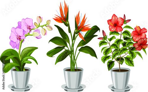 Illustration with indoor flowering plants Fototapet