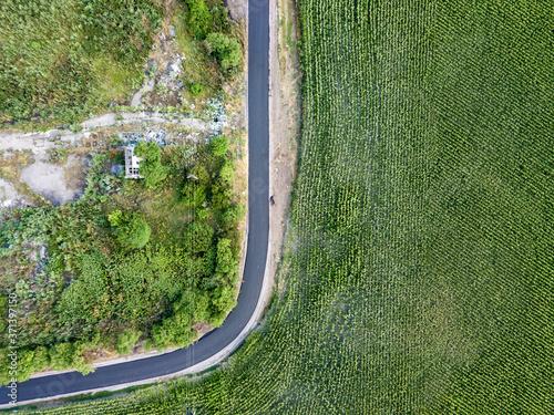 Fototapeta Road through the cornfield, aerial view. obraz na płótnie