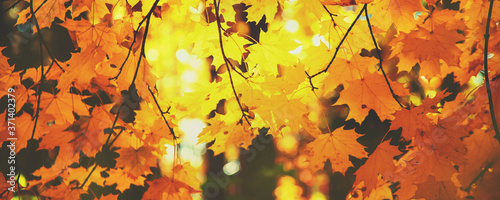 Fotografiet Autumn leaves on a tree. Selective focus.