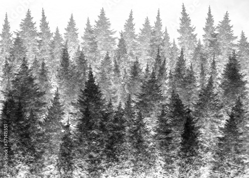 Photo Illustration of a foggy forest for backgrounds