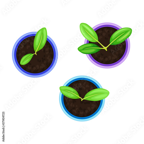 Seedling or Young Plants Growing in Plastic Pot or Box Above View Vector Illustr Wallpaper Mural