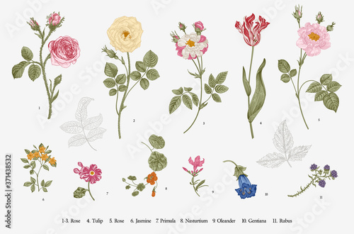 Flowers. Set. Botanical floral vector illustration. Fototapet