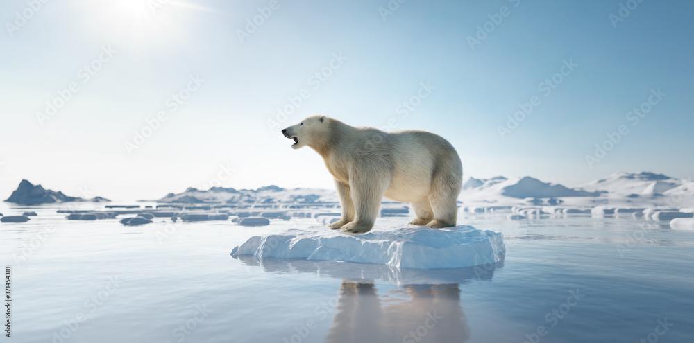 Fototapeta Polar bear on ice floe. Melting iceberg and global warming.