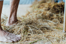 Feet Of An Elderly Person Barefoot In Front Of A Pile Of Straw