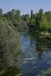 rzeka widok drzewa zieleń lato rośliny