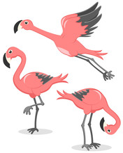 Set Of Pink Flamingos In Diffe...