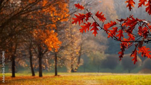 Vászonkép Beautiful Nature Autumn landscape