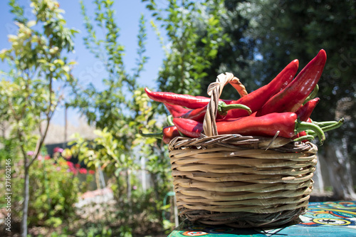 red hot chili pepper in the basket Fototapete