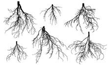 Set Of Bare Roots Of Different...