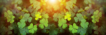 Green Clover Leaf Isolated On ...
