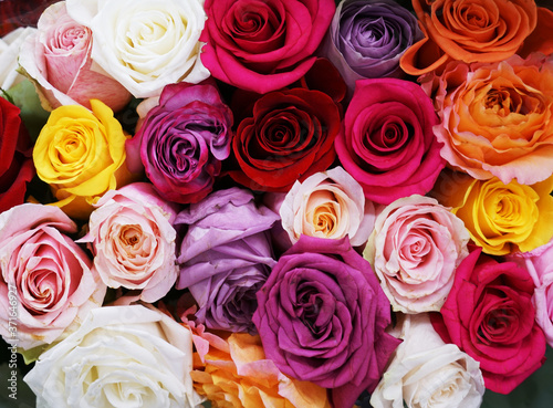 Fotografie, Obraz fresh colorful roses in a bouquet as background