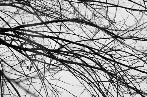 Splątane bezlistne gałęzie w mglisty zimowy dzień