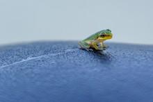 Tiny Tree Frog On A Bike Seat