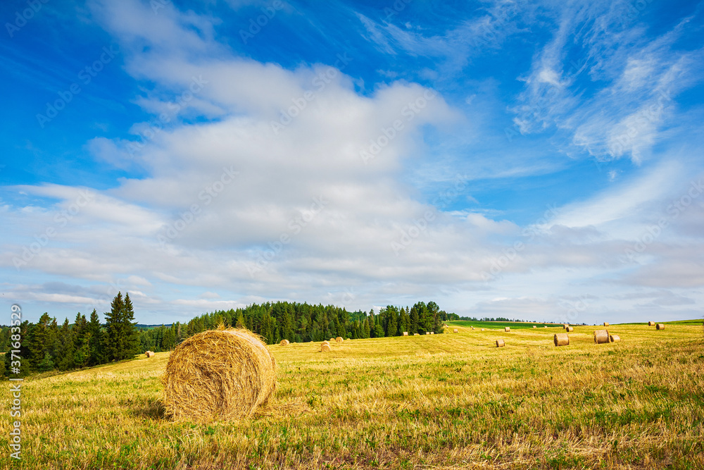 Fototapeta Landscape with straw bales in wheatfield on summer day