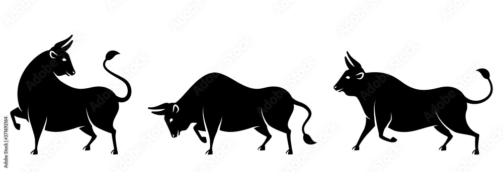 Fototapeta Set Bulls, Cows, Buffaloes. Stylized Silhouettes of Standing in Different Poses, Isolated on White Background